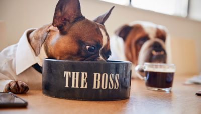 dog-dressed-as-businessmen-eating-from-bowl-A7LYFH5